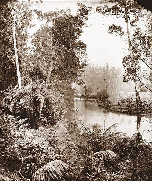 An image of Upper Yarra by Nicholas Caire