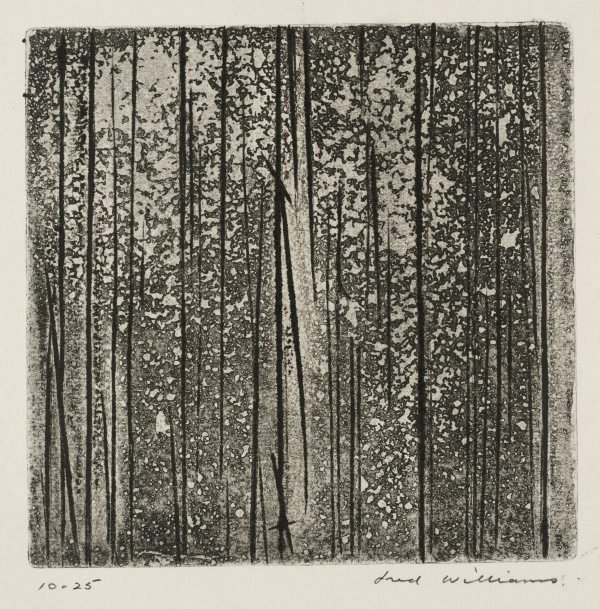 An image of Sherbrooke Forest number 2