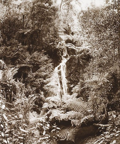 An image of Big Stony Creek Falls, Lorne by Nicholas Caire