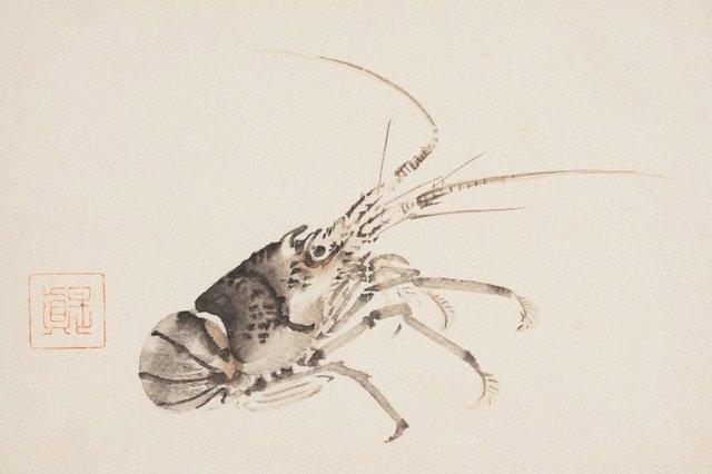 An image of Crayfish