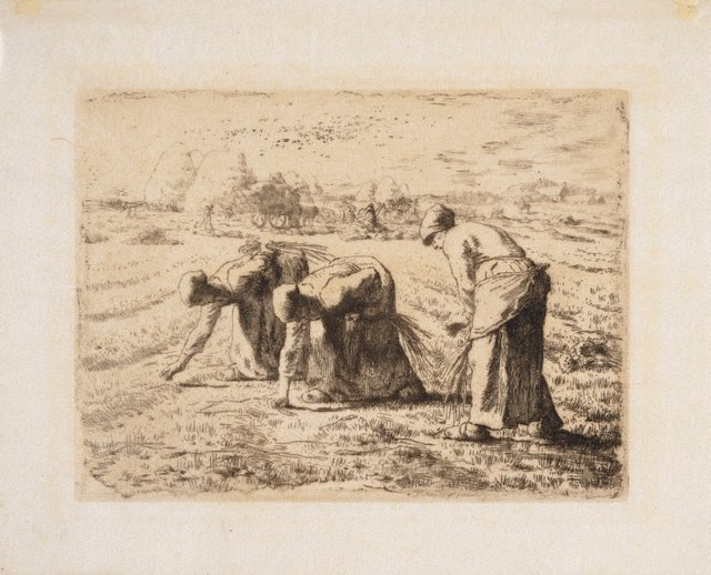 An image of The gleaners