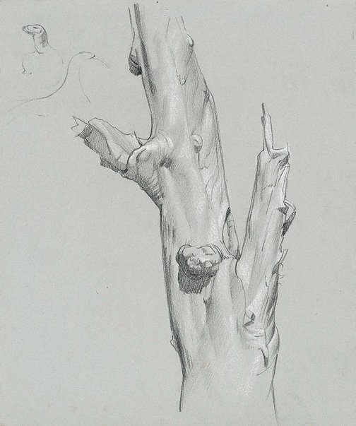 An image of Study of gum tree trunk by Nora Heysen