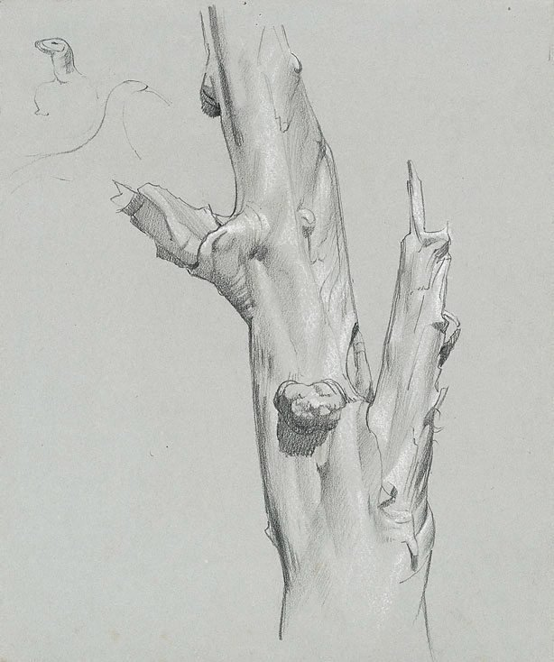 An image of Study of gum tree trunk