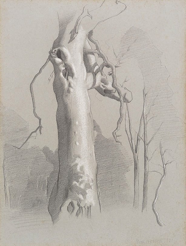 An image of Gum tree, Hahndorf