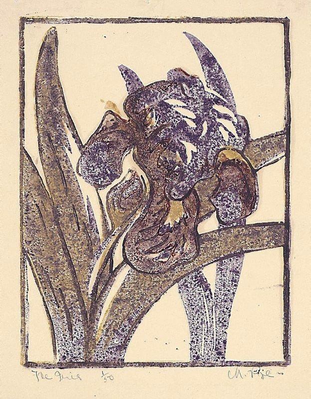 An image of The iris