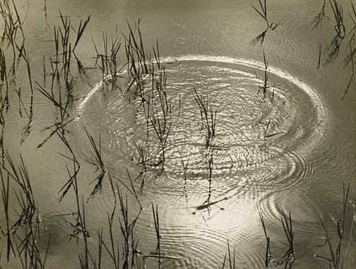 An image of Poetic disturbance by James Hoey