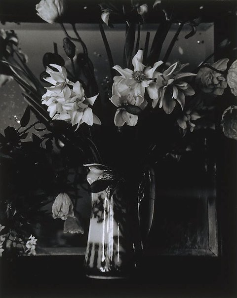 An image of Still life with daffodils by Viva Jillian Gibb