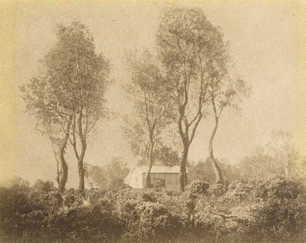 An image of Mid tree and bracken