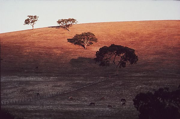 An image of Evening landscape, Gundagai, New South Wales