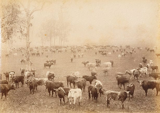 An image of Mustering on a Cattle Station, NSW