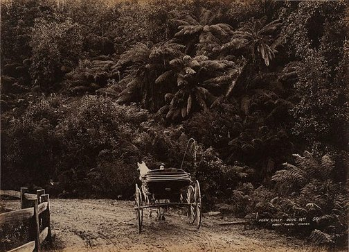 An image of Fern Gully, Blue Mountains by Unknown, Kerry & Co