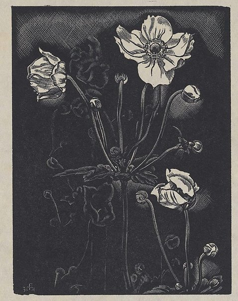 An image of Anemone Japonica by Frank Medworth