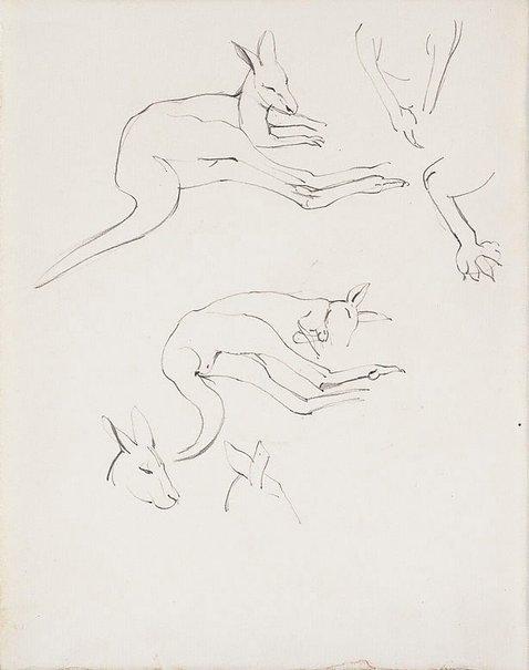 An image of Studies of kangaroos, Adelaide Zoo by Nora Heysen