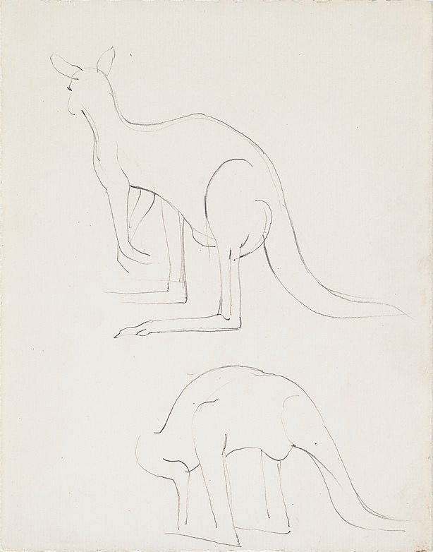 An image of Studies of kangaroos, Adelaide Zoo