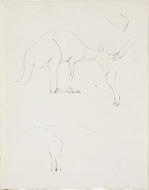 An image of Studies of kangaroos, Adelaide Zoo by Nora Heysen