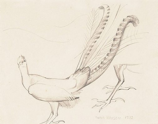 An image of Study of a lyrebird, Adelaide Zoo by Nora Heysen