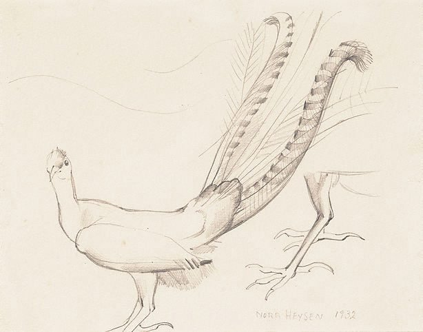 An image of Study of a lyrebird, Adelaide Zoo