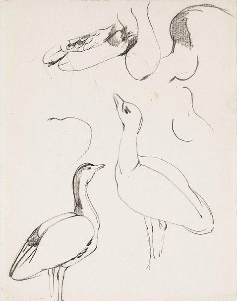 An image of Study of a bustard, Adelaide Zoo by Nora Heysen