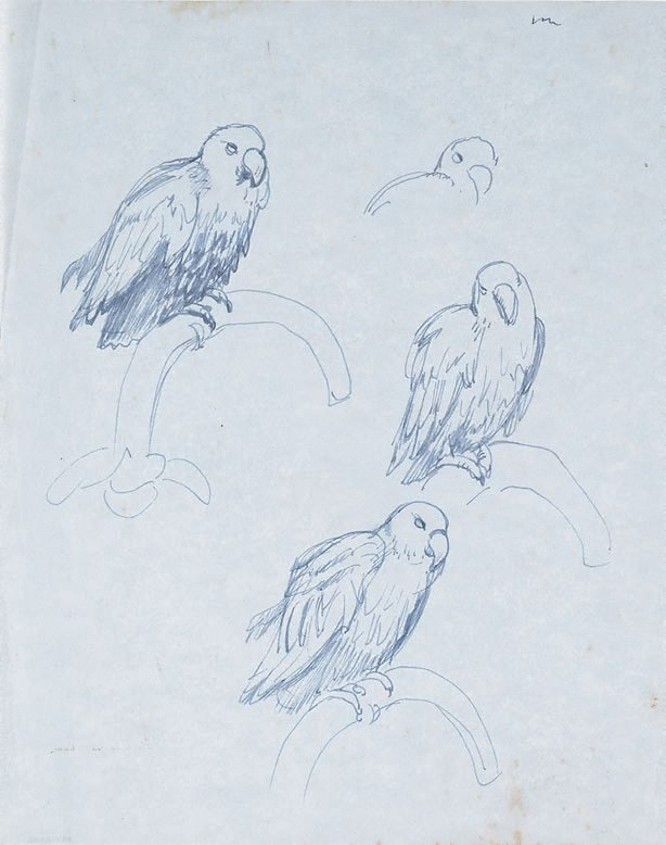 An image of Studies of a parrot, Adelaide Zoo