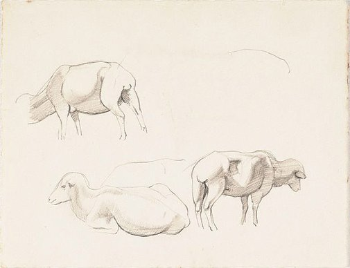 An image of Studies of sheep by Nora Heysen