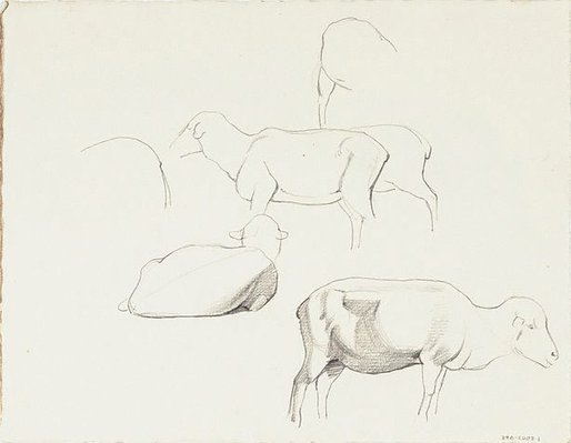 Alternate image of Studies of sheep by Nora Heysen