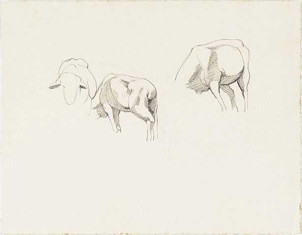 An image of Studies of sheep