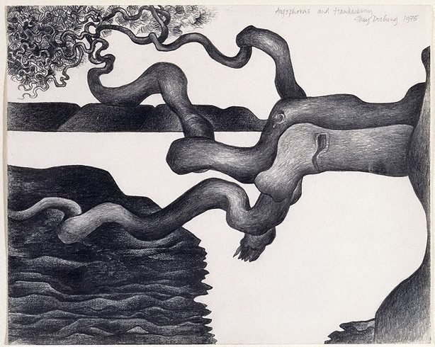An image of Angophoras and Hawkesbury