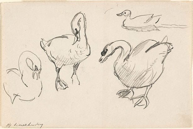 An image of recto: (Studies of swans and a duck) verso: (Further studies of a swan)