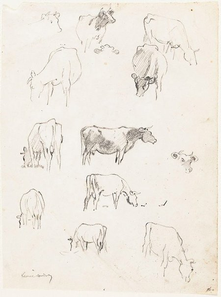 An image of (Sheet of studies of cows) by Lionel Lindsay