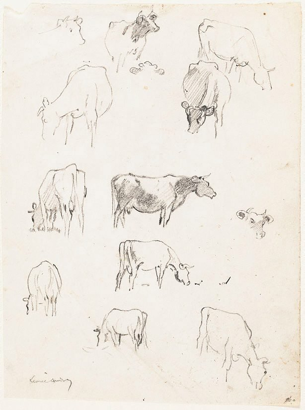 An image of (Sheet of studies of cows)