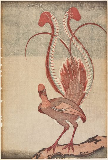 AGNSW collection Paul Haefliger Lyrebird 1934