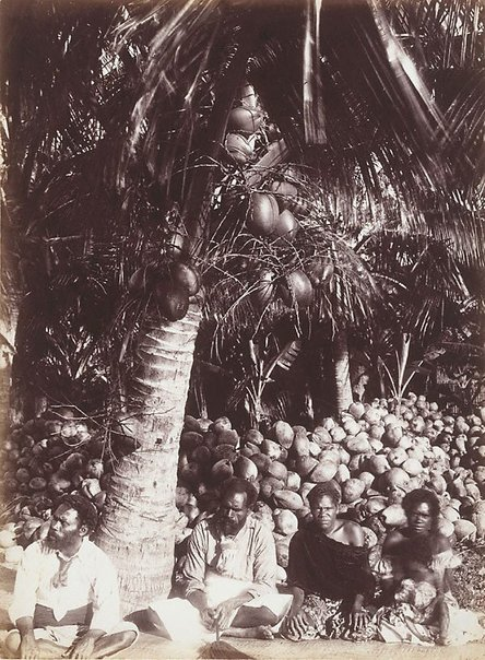 An image of Untitled (Native workers and cocoa-nuts, Fiji) by Henry King