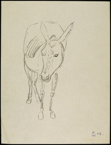 An image of Donkey by David Strachan