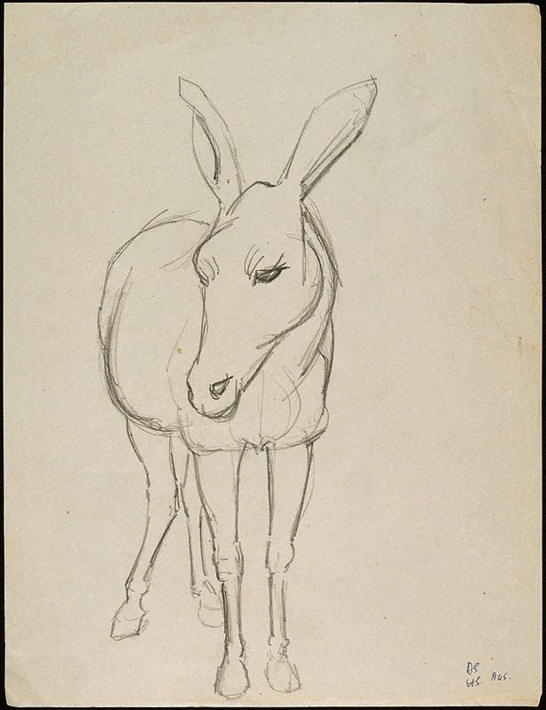 An image of Donkey