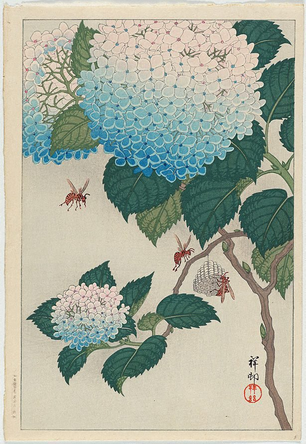 An image of Hydrangeas and wasps