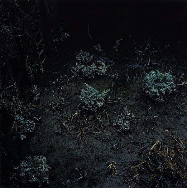 An image of untitled I (Backwater)