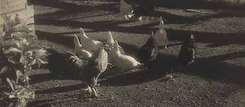 An image of Untitled (Barnyard fowls) by Henri Mallard