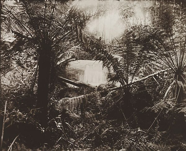 An image of Untitled (ferns and gully)