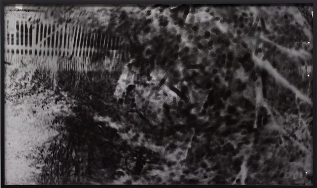 An image of day dreams: camera obscura (negative)