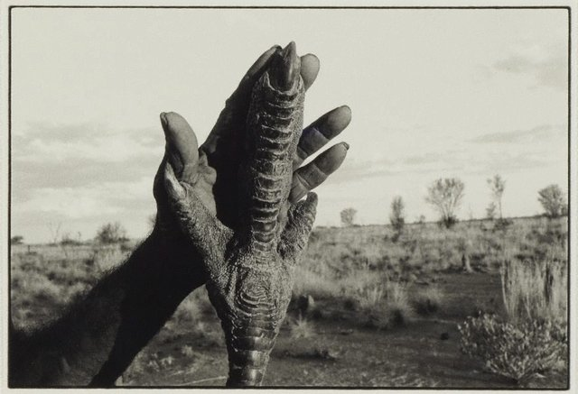 An image of Emu hand