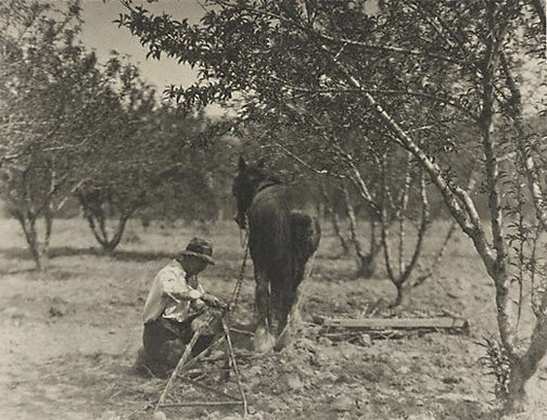An image of Horse and plough by Henri Mallard