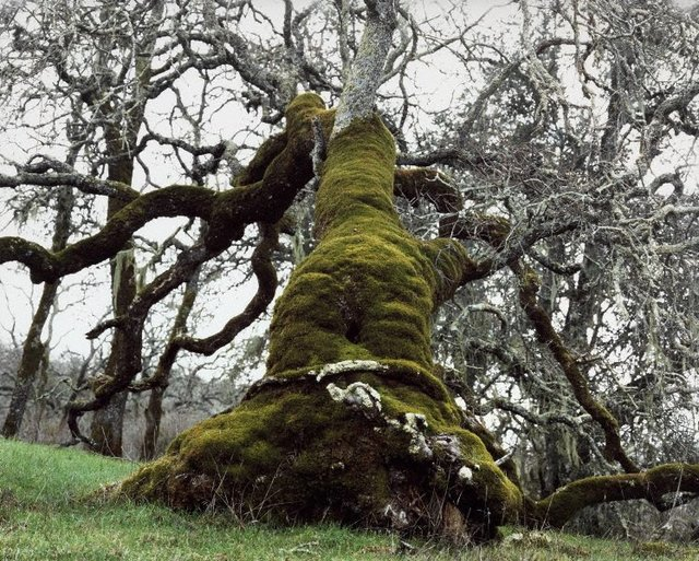 An image of At daylight the miserable man got carried to an oak