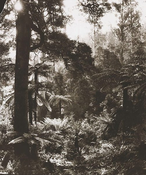 An image of Untitled (Condon's Gully) by Nicholas Caire