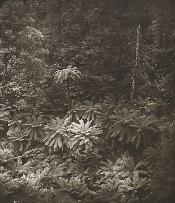 An image of The fairy scene, Black Spur