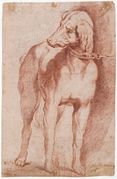 An image of Study of a dog by School of Paolo Veronese