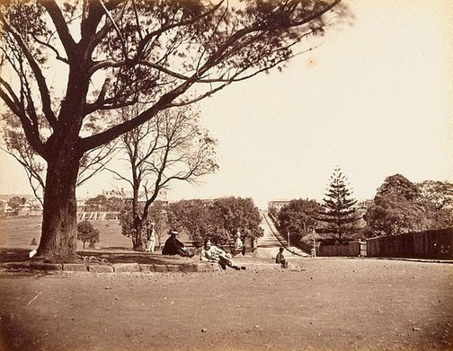 An image of The Domain or Peoples Park Sydney, New South Wales by Charles Percy Pickering