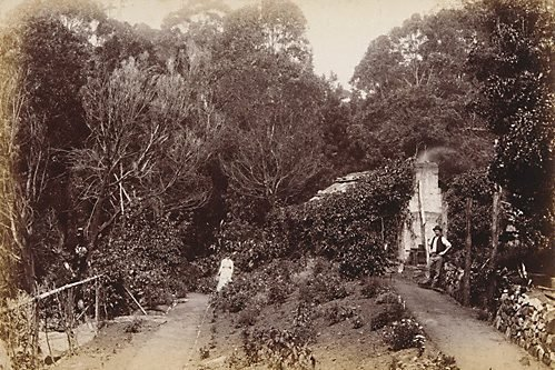 An image of Australian Bush house by Unknown