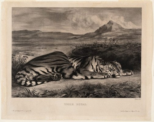 An image of Royal tiger by Eugène Delacroix