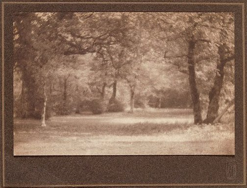 An image of Untitled (landscape, path through wood) by Frederick H Evans