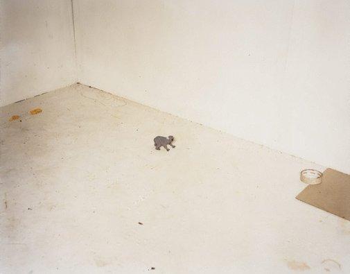 An image of #1 by Justine Varga